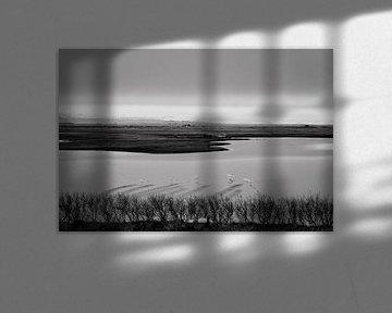 IJslandse zwanen in zwart-wit von RUUDC Fotografie