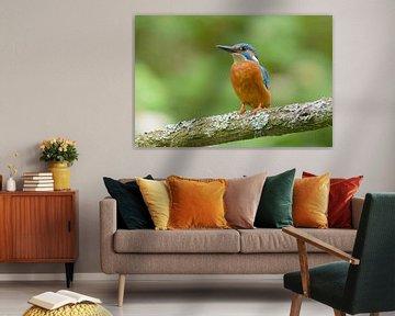 Kleurrijkste vogel van Nederland van Remco Van Daalen