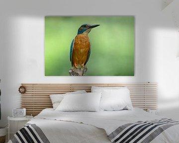 IJsvogel als standbeeld van Remco Van Daalen