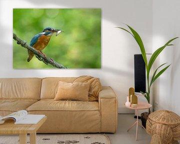IJsvogel met gevangen visje von Remco Van Daalen