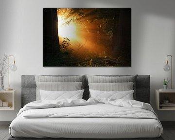 Zonlicht door bomen van Ilona Bredewold