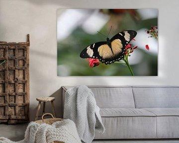 vlinder von Rianne de Heij