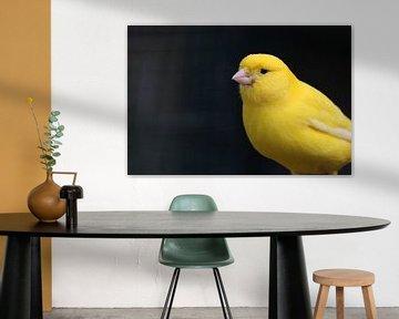 geel op zwart von Rianne de Heij