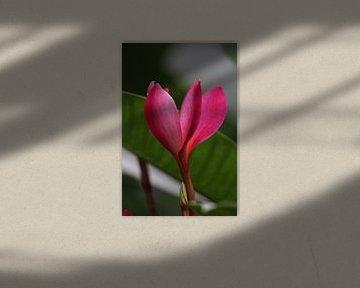 Felle bloem von Rianne de Heij