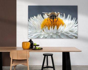 Bien auf einer weisse Blume. von Annette Schoof