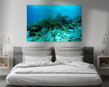 Unterwasser von Harald Schottner