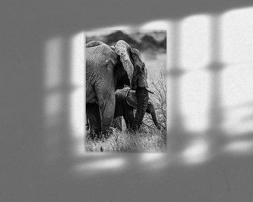 Olifant met baby von Stijn Verbruggen