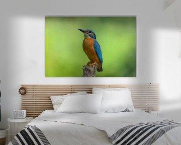 IJsvogel kijkt omhoog van Remco Van Daalen
