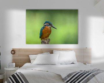 IJsvogel kijkt naar beneden van Remco Van Daalen