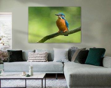 IJsvogel rustend op een tak van Remco Van Daalen