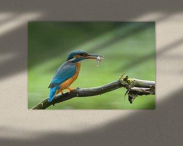 Ijsvogel vrouw met vis van Remco Van Daalen