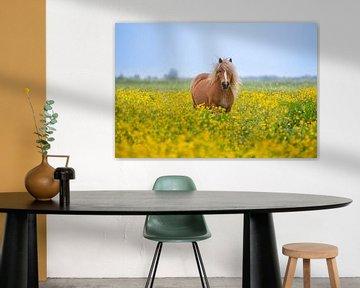 Pony in de wei  /  Ponny between the flowers von Wim Kanis