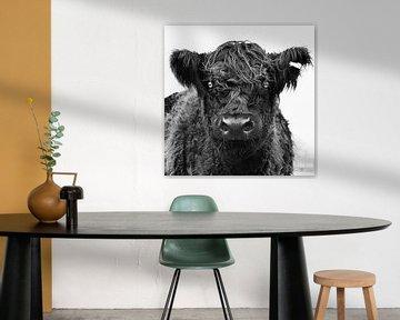 Koe in het veld. van Vincent van Wijk