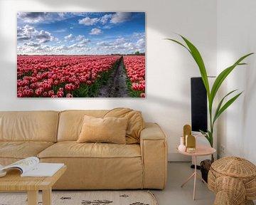 Bollenveld vol Tulpen in Groningen von Frenk Volt