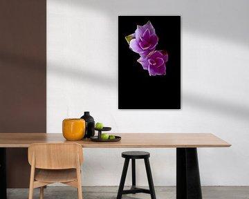 Lila Blumen mit schwarzem Hintergrund von Doris van Meggelen