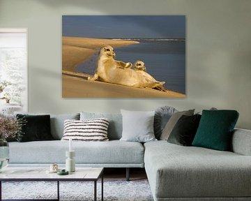 Twee zeehonden liggend in de zon van Beschermingswerk voor aan uw muur