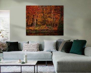 Herfst Kleuren sur Jimmy Sorber