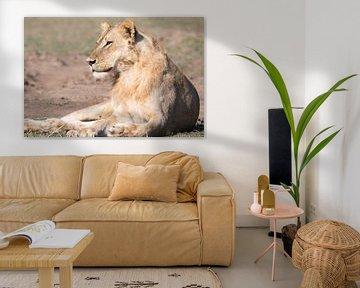 Leeuwin van Felix Sedney