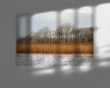 Winter in de meersen van de Bourgoyen