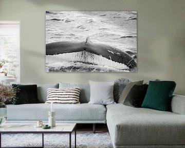 walvisstaart van Berend-Jan Bel
