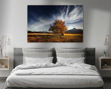 Eenzame lenga boom in herfst landschap van Chris Stenger