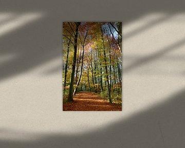 Herfst in al haar glorie van Marcel van Duinen