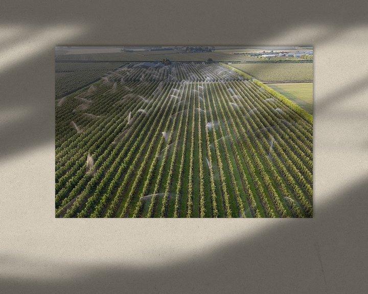 Beispiel: De fruitbomen worden besproeid von Gertjan koster