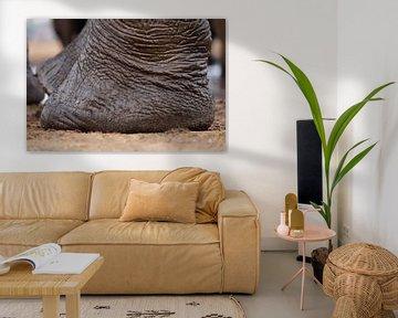 Olifant voeten von Erna Haarsma-Hoogterp