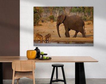 Olifant ontmoet wrattenzwijnen von Erna Haarsma-Hoogterp