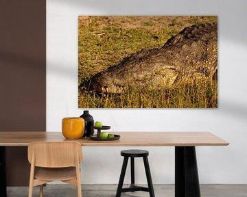 Krokodil in de zon van Erna Haarsma-Hoogterp