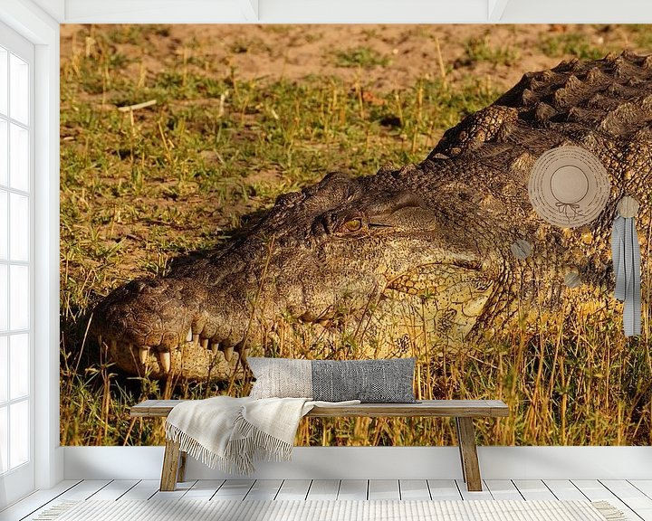 Sfeerimpressie behang: Krokodil in de zon van Erna Haarsma-Hoogterp