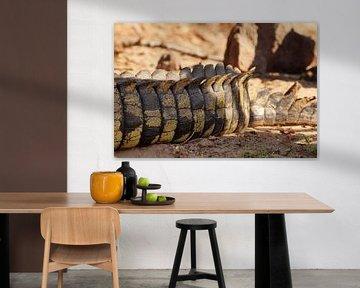 Staart van de krokodil von Erna Haarsma-Hoogterp