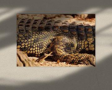 Close up krokodil van Erna Haarsma-Hoogterp
