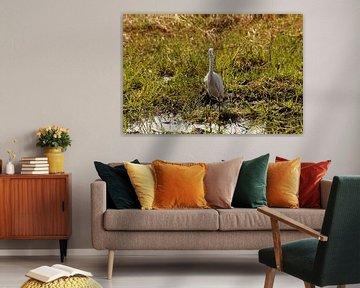 The bird van Erna Haarsma-Hoogterp