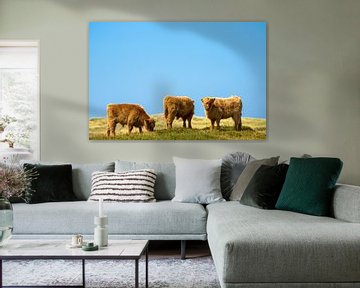Hooglanders op Texel van Edwin Walstra
