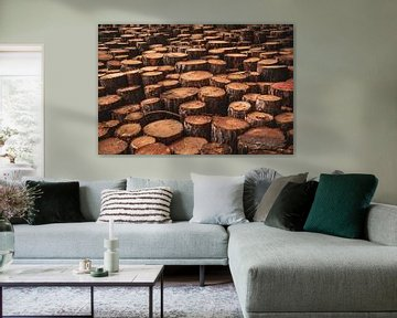 Stapels hout in de duinen van Schoorl (houtkap) van Jeroen Somers