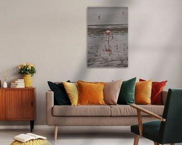 Weerspiegelingen van een flamingo van Erna Haarsma-Hoogterp