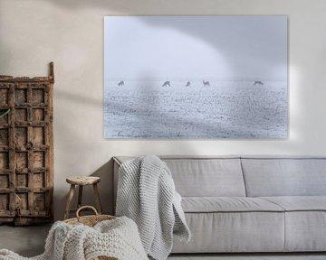 reeën in koude mistige ochtend van Jo Pixel