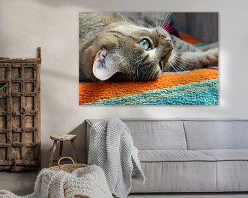Cyperse kat von Marieke Funke
