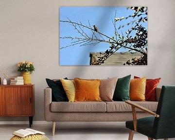 Kolibrie op tak von Lisanne Rodenburg