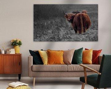 Schotse hooglander op grijze achtergrond von Sven Zoeteman