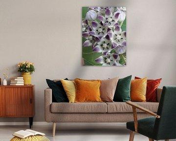 Tropische wilde bloem in paars en wit von Renee Alexandra Serlier