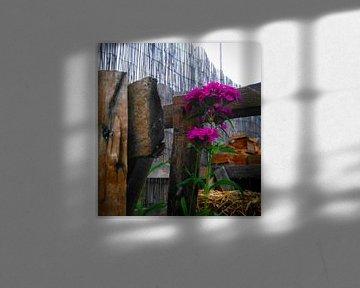 Purpurrote Blume zwischen dem Gartenholz von Deborah Blanc