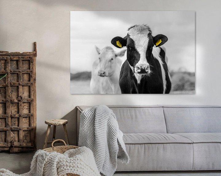 Sfeerimpressie: Bonte en witte koe van jowan iven