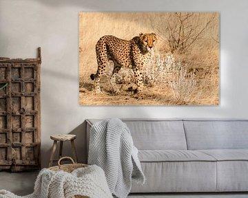 Cheetah van Anita Loos