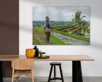 Balinese op de Jatiluwih rijstvelden van Lex van Doorn