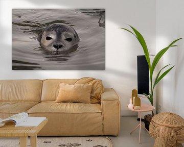 zeehond in water van Annelies Cranendonk