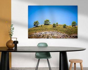 Bomen op een heuvelrug van Bernardine de Laat