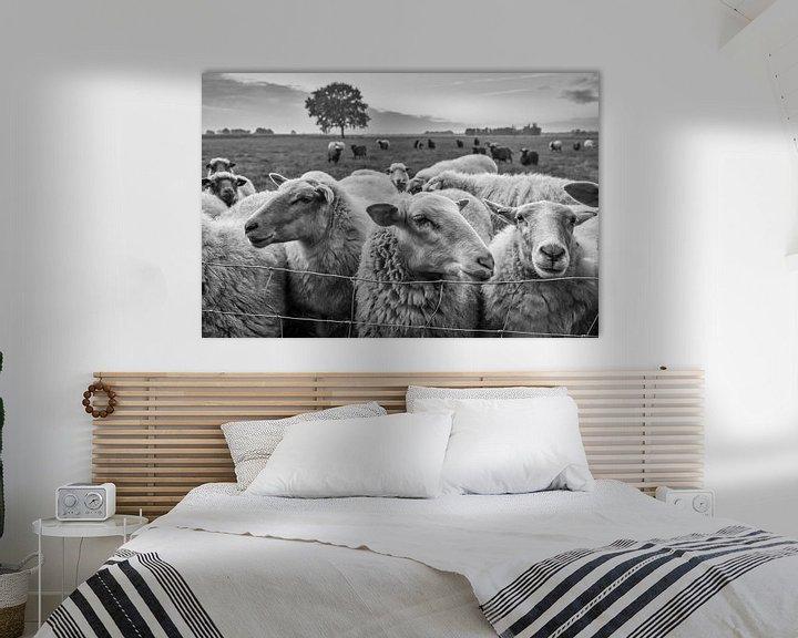 Sfeerimpressie: schapen in de wei van jan van de ven
