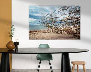 Baumstamm an der Ostseeküste bei Meschendorf von Rico Ködder